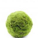 Moss-ball, diameter 17cm, green